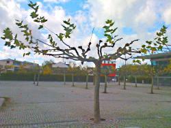 Baum Germering