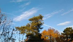 Bäume Wolken und ein Streifen