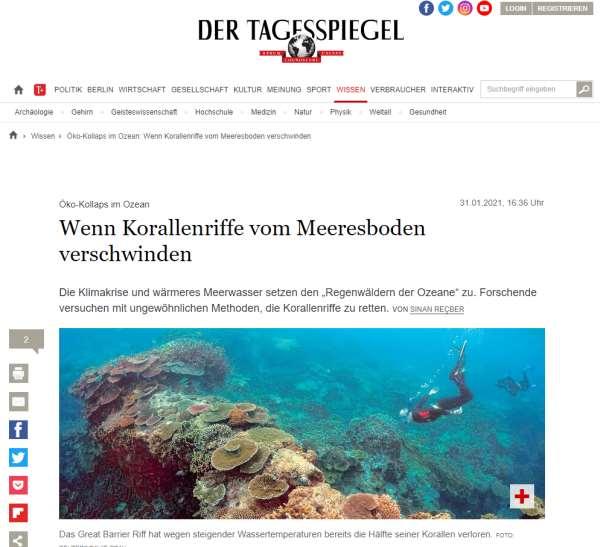 Tagesspiegel: Wenn Korallenriffe vom Meeresboden verschwinden